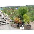 Зимний сад «Алтайское лето»